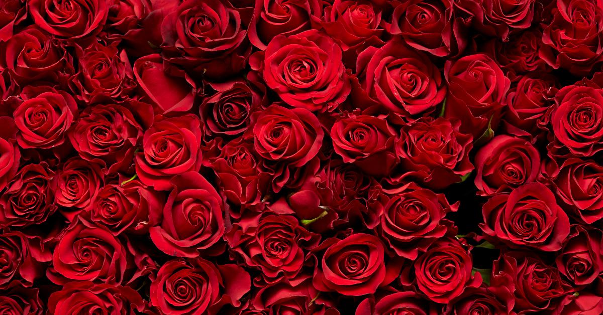 Vogliamo Le Rose Forum Gorizia